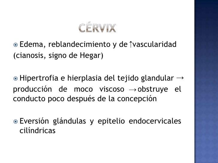 útero<br />Semana 12 casi esférico y a su término no puede conservarse dentro de la pelvis.<br />Aumenta rápidamente en lo...