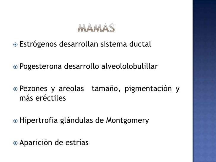 Trompas de falopio<br />Hipertrofia leve de la musculatura<br />Epitelio más aplanado<br />