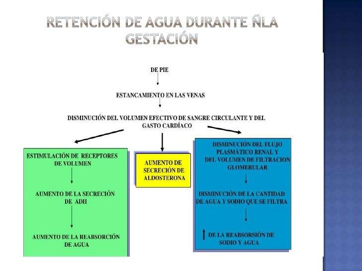 3.0 L Aumento de la volemia + útero + mamas</li></li></ul><li>Retención de agua durante ñla gestación <br />