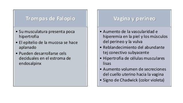 Trompas de Falopio • Su musculatura presenta poca hipertrofia • El epitelio de la mucosa se hace aplanado • Pueden desarro...