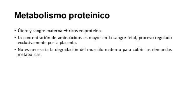 Metabolismo proteínico • Útero y sangre materna  ricos en proteína. • La concentración de aminoácidos es mayor en la sang...