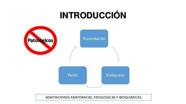 Fisiologia del embarazo Slide 2