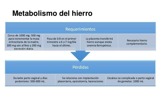 Metabolismo del hierro Requerimientos Cerca de 1000 mg: 500 mg para incrementar la masa eritrocitaria de la madre, 300 mg ...