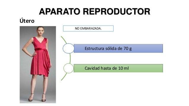 Fisiologia del embarazo Slide 3