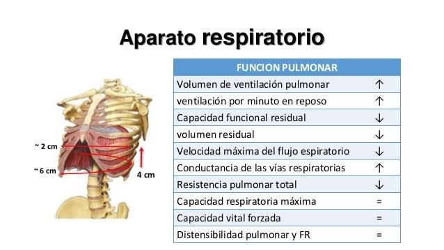 Equilibrio acidobásico ↑ del volumen de ventilación pulmonar  ↓ PCO2 sanguínea  Disnea  Progesterona > estrógeno  Aumento ...