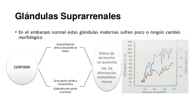 1500 pg/ml para el termino (aumento de mas de 15 veces)  Incremento de la producción renal por estimulación estrogenica  N...