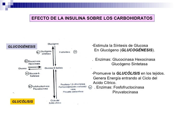 EFECTO DE LA INSULINA SOBRE LOS CARBOHIDRATOS <ul><li>Estimula la Síntesis de Glucosa </li></ul><ul><li>En Glucógeno ( GLU...