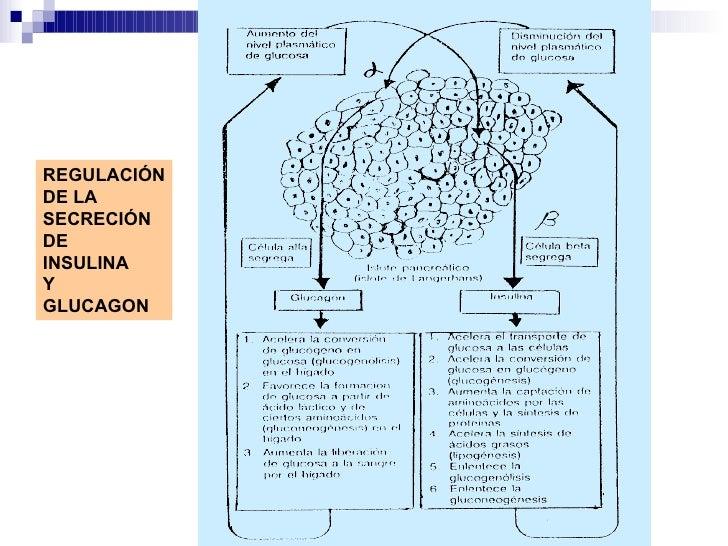 REGULACIÓN DE LA SECRECIÓN DE  INSULINA Y GLUCAGON