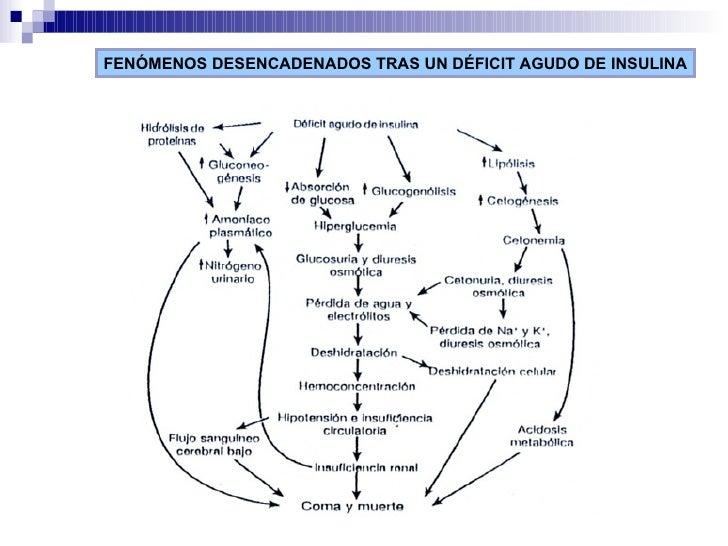 FENÓMENOS DESENCADENADOS TRAS UN DÉFICIT AGUDO DE INSULINA