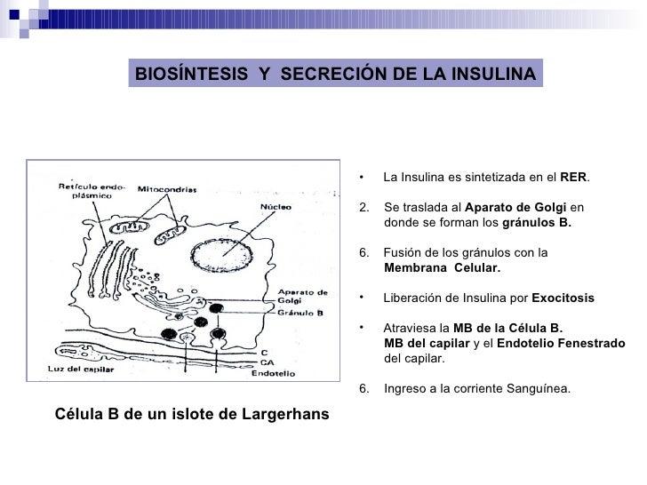 Fisiologia Del Pancreas Endocrino Slide 3