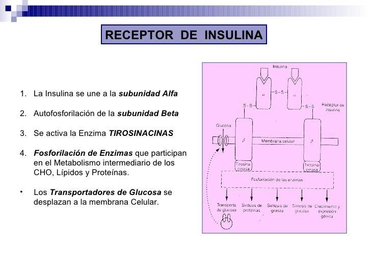 RECEPTOR  DE  INSULINA <ul><li>1.  La Insulina se une a la  subunidad Alfa </li></ul><ul><li>2.  Autofosforilación de la  ...