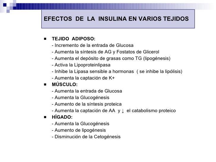 EFECTOS  DE  LA  INSULINA EN VARIOS TEJIDOS <ul><li>TEJIDO  ADIPOSO: </li></ul><ul><li>- Incremento de la entrada de Gluco...