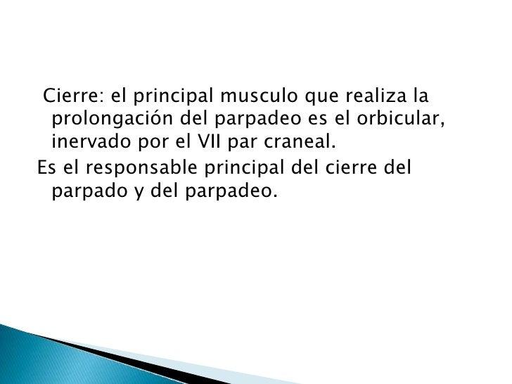 Cierre: el principal musculo que realiza la prolongación del parpadeo es el orbicular, inervado por el VII par craneal. <...