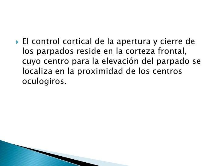 El control cortical de la apertura y cierre de los parpados reside en la corteza frontal, cuyo centro para la elevación de...