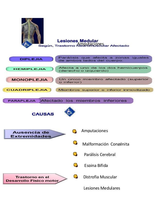 Fisiologia del sistema nervioso, sistema nervioso periferico pdf