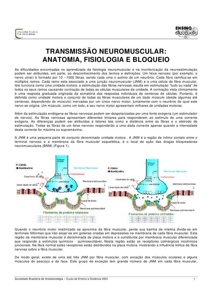 TRANSMISSÃO NEUROMUSCULAR:                     ANATOMIA, FISIOLOGIA E BLOQUEIOAs dificuldades encontradas no aprendizado d...