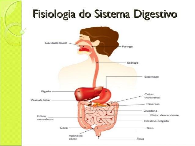 Fisiologia do Sistema DigestivoFisiologia do Sistema Digestivo
