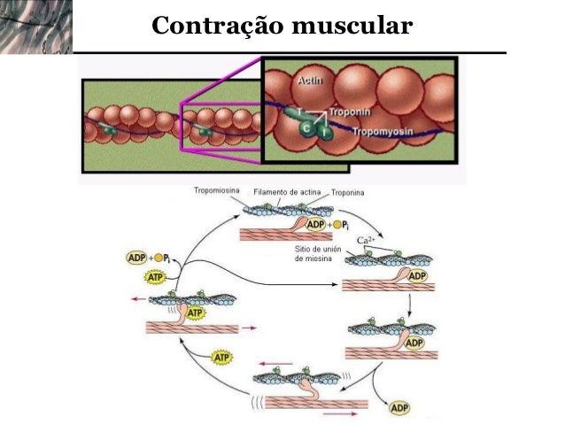 Resultado de imagem para contração muscular fotos