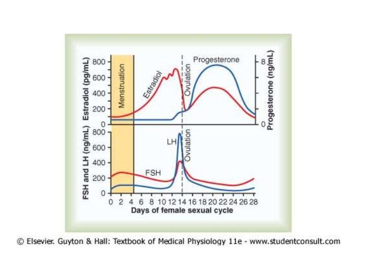 Fisiologia femeninas antes del embarazo y hormonas femeninas