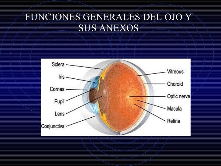 Fisiologia general del ojo