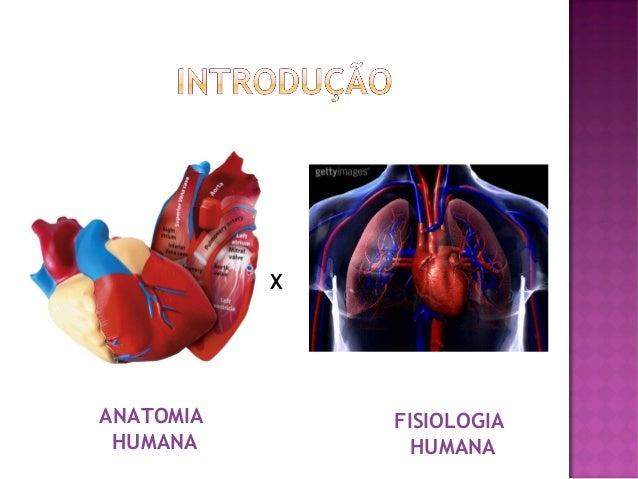 X  ANATOMIA HUMANA  FISIOLOGIA HUMANA