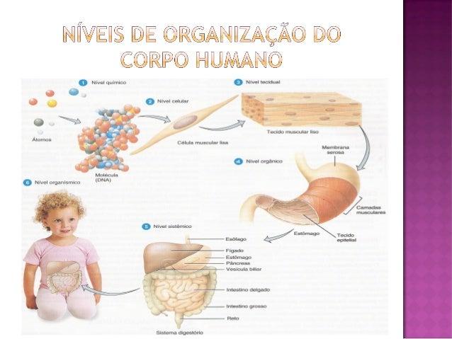      Diferentes sistemas do corpo coordenando o animal como um todo. Ex: sistema cardiovascular x pressão arterial x ri...