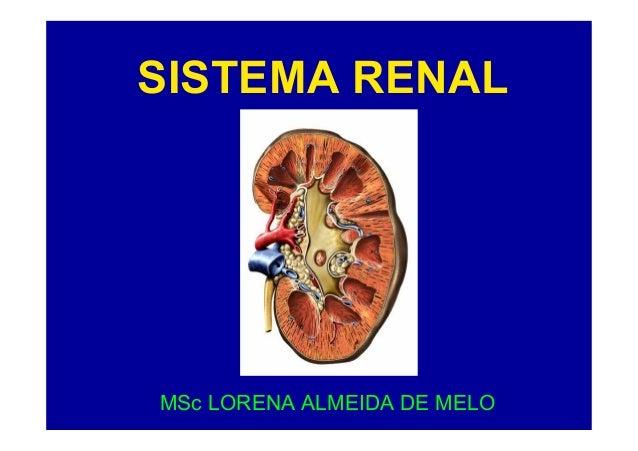 SISTEMA RENAL  MSc LORENA ALMEIDA DE MELO