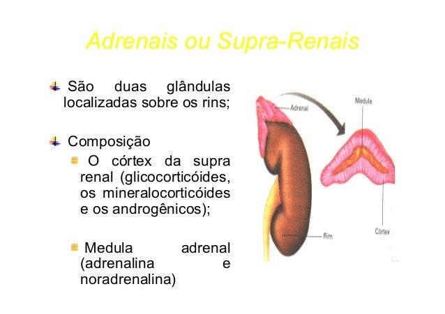 Hormônio Adrenocorticotrópico (ACTH) Regula os hormônios do córtex supra- renal; Hormônios adrenocorticais Mineralocorticó...