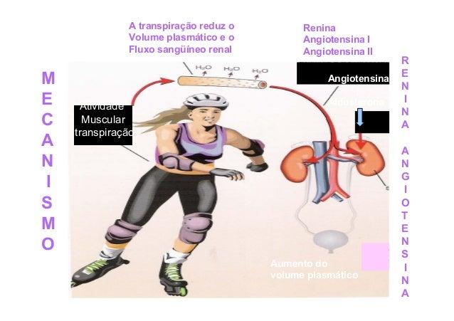 Hormônios Adrenocorticais  Cortisol ou Hidrocortisona Hipotálamo - ACTH – Córtex supra-renal Promove a utilização de ácido...