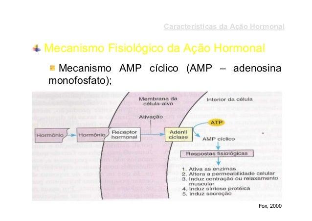 Características da Ação Hormonal  Mecanismo Fisiológico da Ação Hormonal Mecanismo AMP cíclico (AMP – adenosina monofosfat...