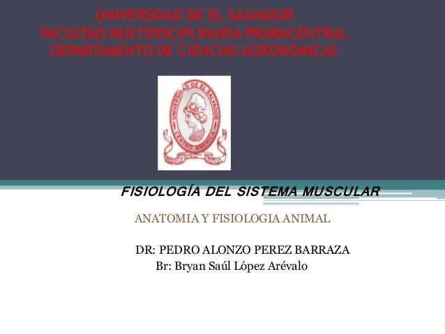 UNIVERSIDAD DE EL SALVADOR FACULTAD MULTIDISCIPLINARIA PRARACENTRAL DEPARTAMENTO DE CIENCIAS AGRONOMICAS ANATOMIA Y FISIOL...