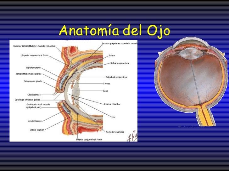 Fisiologia Organos Sentidos