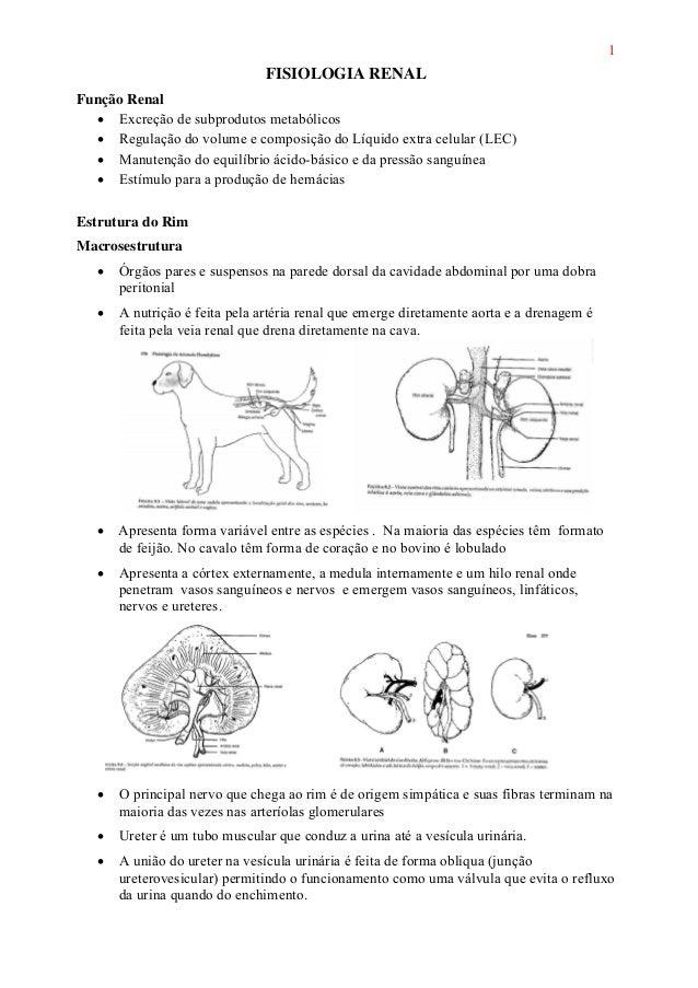 1 FISIOLOGIA RENAL Função Renal • Excreção de subprodutos metabólicos • Regulação do volume e composição do Líquido extra ...