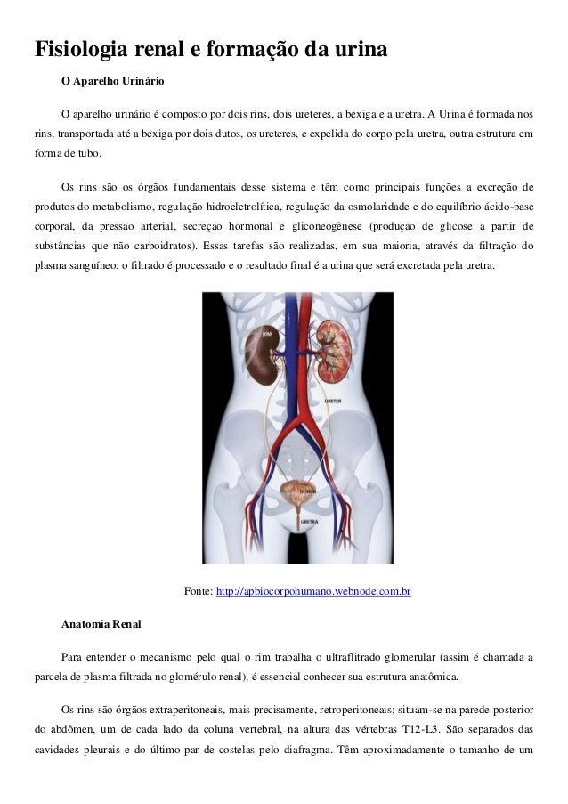 Fisiologia renal e formação da urina O Aparelho Urinário O aparelho urinário é composto por dois rins, dois ureteres, a be...