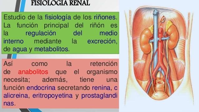 fisiologia-renal-1-638.jpg?cb=1495766892