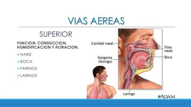 Fisiologia respiratoria - Humidificador que es ...