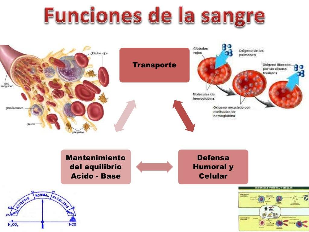 Funciones Generales De La Sangre Y Globulos Rojos
