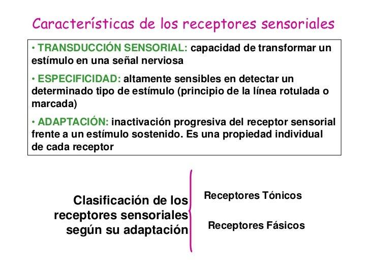 Fisiologia Sensorial