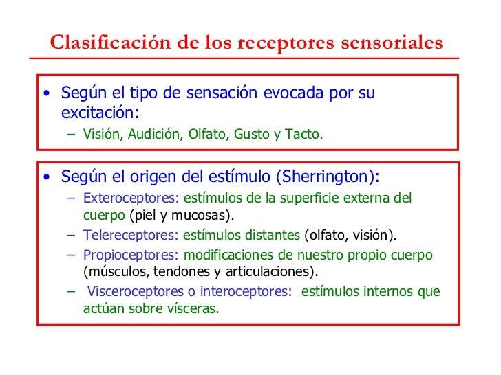 Resultado de imagen de sentidos propioceptores, visceroceptores o interoceptores