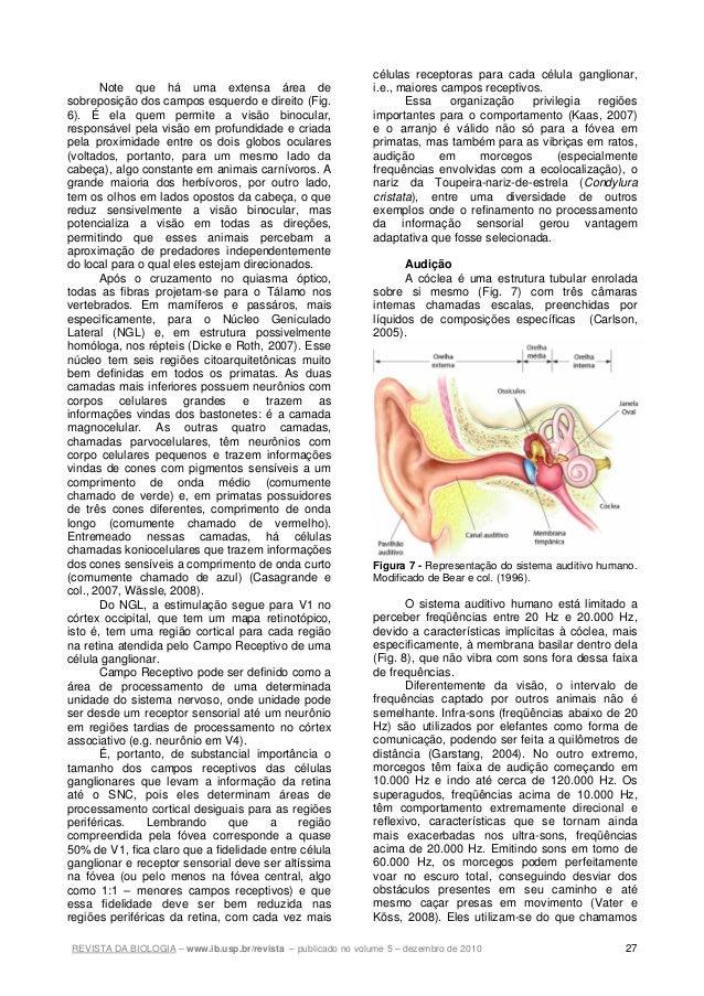 REVISTA DA BIOLOGIA – www.ib.usp.br/revista – publicado no volume 5 – dezembro de 2010 27 Note que há uma extensa área de ...