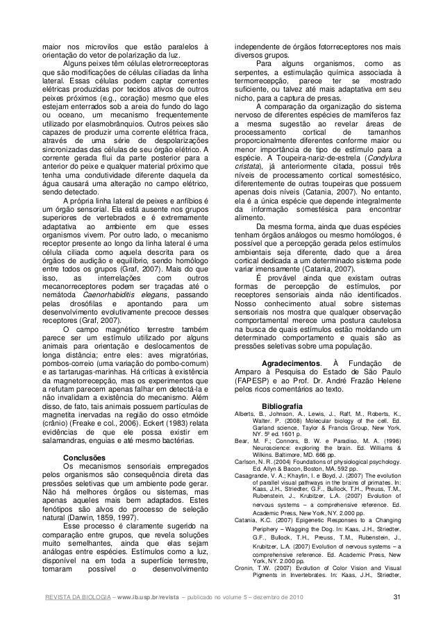REVISTA DA BIOLOGIA – www.ib.usp.br/revista – publicado no volume 5 – dezembro de 2010 31 maior nos microvilos que estão p...