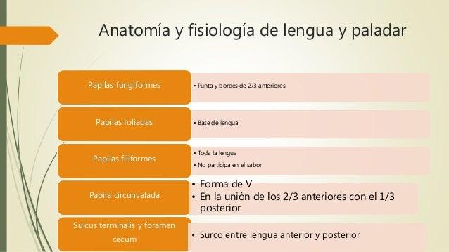 Anatomia y Fisiologia tracto digestivo superior