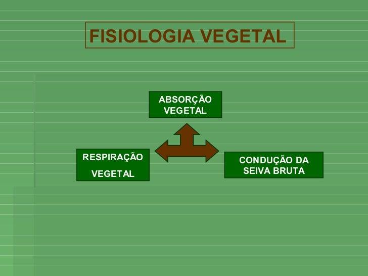 FISIOLOGIA VEGETAL             ABSORÇÃO              VEGETALRESPIRAÇÃO              CONDUÇÃO DA VEGETAL                 SE...