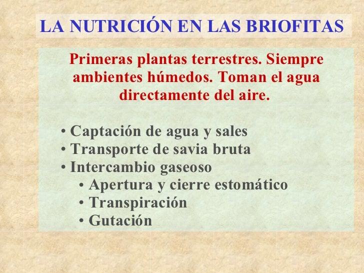LA NUTRICIÓN EN LAS BRIOFITAS   <ul><li>Primeras plantas terrestres. Siempre ambientes húmedos. Toman el agua directamente...