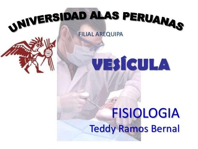 FILIAL AREQUIPA    VESÍCULA           FISIOLOGIA   Teddy Ramos Bernal