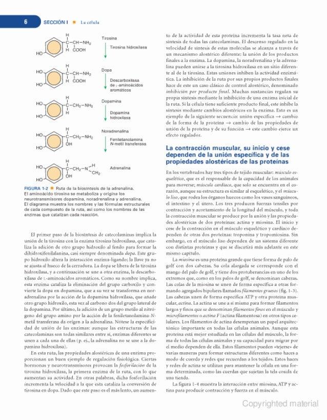 Único Fundamentos De La Anatomía Y La Fisiología Cuarta Edición ...