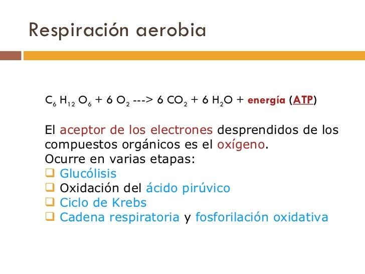 Respiración aerobia <ul><li>C 6 H 12 O 6 + 6 O 2 ---> 6 CO 2 + 6 H 2 O + energía ( ATP )   </li></ul><ul><li>El  ac...