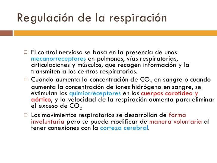 Regulación de la respiración <ul><li>El control nervioso se basa en la presencia de unos  mecanorreceptores  en pulmones, ...