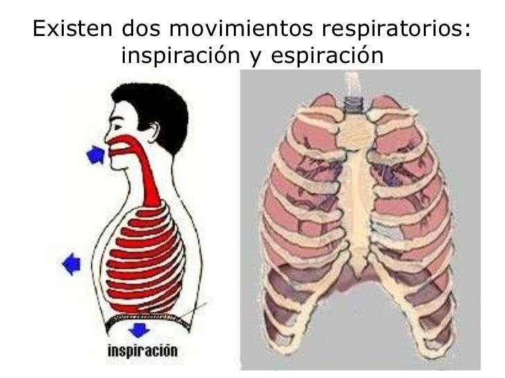 Existen dos movimientos respiratorios: inspiración y espiración