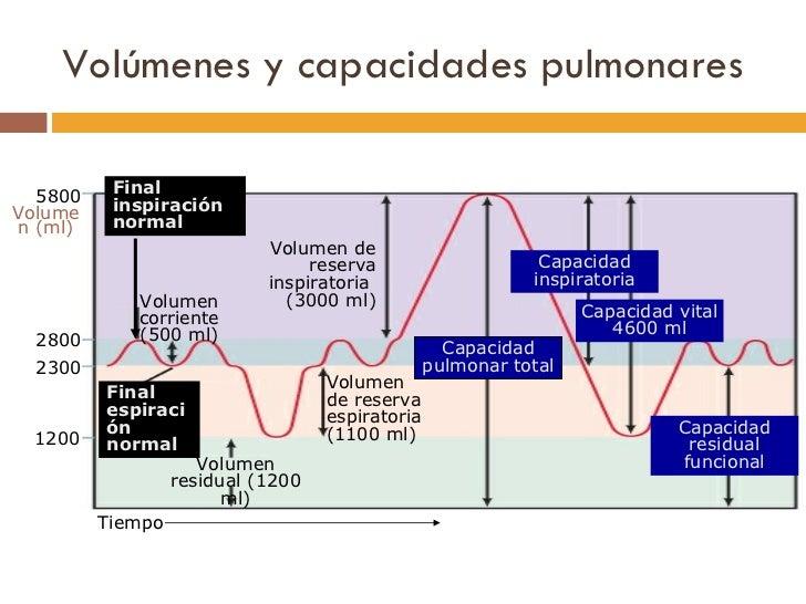 Volúmenes y capacidades pulmonares 5800 2800 2300 Volumen (ml) 1200 Volumen corriente (500 ml) Volumen residual (1200 ml) ...